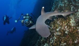 Fotografiando un tiburón