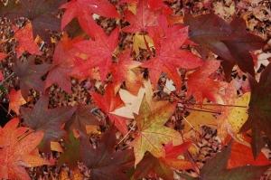 fiesta del otoño en la biblioteca