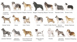 Perros de todas las razas en Expocanina