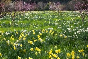 cuentacuentos de primavera