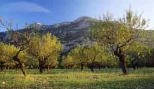 Paisaje de la comarca del Matarraña