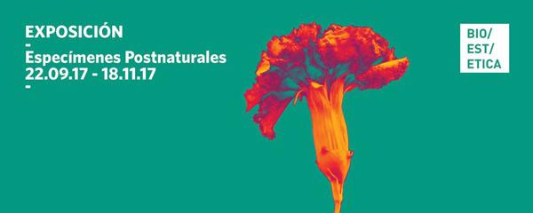 postnaturaleza en el museo de cc naturales