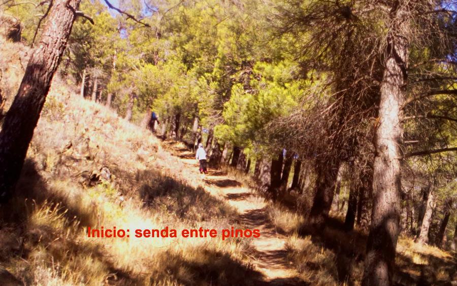 senda de pinos